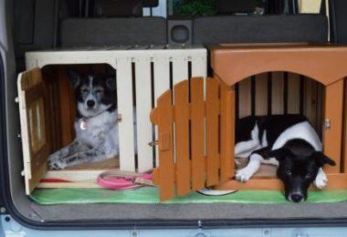 【オーダーメイドの木製犬舎】今回は、車内用ケージを製作お届けしました!